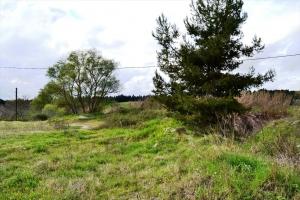 Земельный участок 4650 m² на Кассандре (Халкидики)