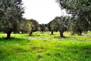 Земельный участок 8500 m² на Кассандре (Халкидики)