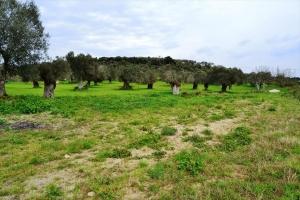 Земельный участок 752 m² на Кассандре (Халкидики)