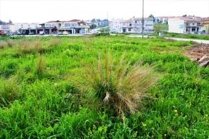 Земельный участок 1166 m² на Кассандре (Халкидики)