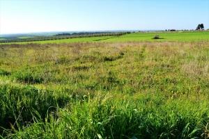 Земельный участок 4400 m² в Халкидиках