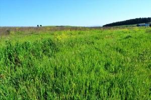 Земельный участок 4500 m² в Халкидиках