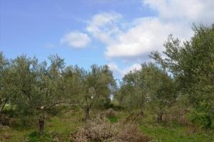 Земельный участок 3600 m² на Кассандре (Халкидики)