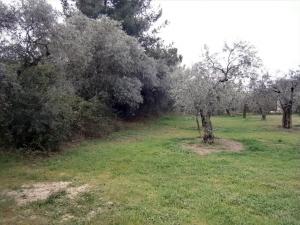 Земельный участок 350 m² на Тасосе