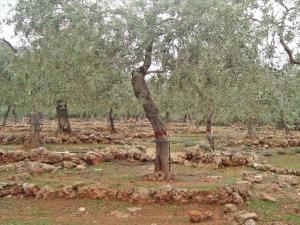 Земельный участок на Тасосе