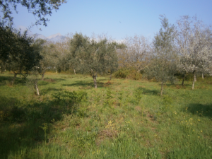 Земельный участок 600 m² на Тасосе