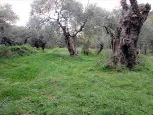 Земельный участок 2200 m² на Тасосе