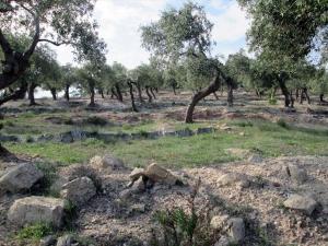 Земельный участок 12788 m² на Тасосе