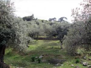 Земельный участок 11250 m² на Тасосе