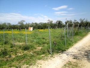 Земельный участок 1500 m² на Тасосе