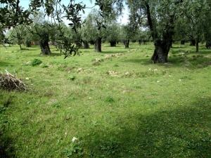 Земельный участок 4250 m² на Тасосе