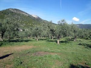 Земельный участок 3150 m² на Тасосе