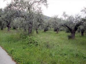 Земельный участок 1350 m² на Тасосе
