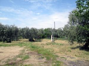 Земельный участок 4700 m² на Тасосе