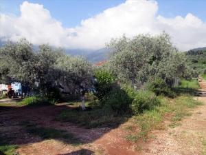 Земельный участок 400 m² на Тасосе