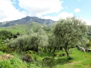 Земельный участок 700 m² на Тасосе