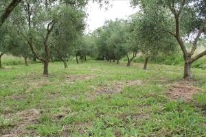 Земельный участок 1000 m² на о. Корфу