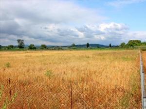 Земельный участок 4253 m² на Пелопоннесе