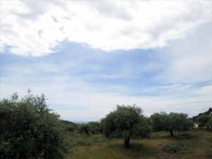 Земельный участок 4300 m² на Тасосе