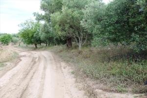 Земельный участок 5500 m² на Кассандре (Халкидики)