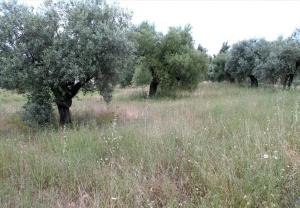 Земельный участок 6000 m² на Ситонии (Халкидики)