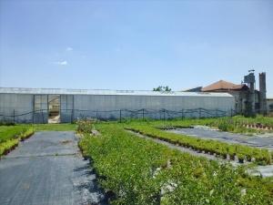 Бизнес 4800 m² на Олимпийской Ривьере