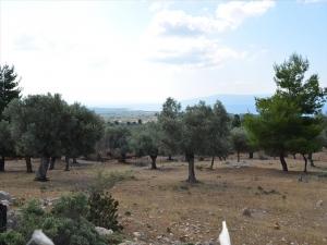 Земельный участок 6500 m² Эвия