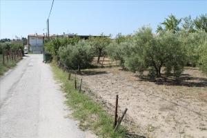 Земельный участок 1100 m² на Ситонии (Халкидики)