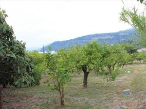 Земельный участок 1215 m² на Пелопоннесе