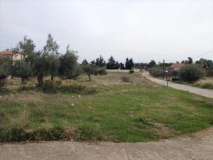 Земельный участок 7069 m² на Пелопоннесе
