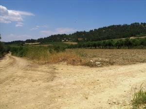 Земельный участок 4385 m² на Кассандре (Халкидики)
