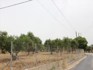 Земельный участок 5250 m² на Пелопоннесе