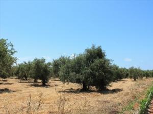 Земельный участок 8500 m² на Пелопоннесе