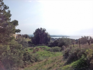 Земельный участок 12000 m² на Пелопоннесе