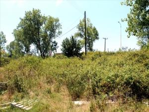 Земельный участок 13000 m² на Кассандре (Халкидики)