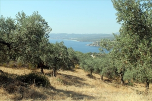 Земельный участок 10000 m² на Афоне (Халкидики)