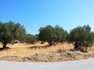 Земельный участок 2000 m² на Крите