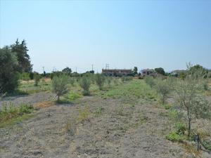 Земельный участок 2000 m² на Пелопоннесе