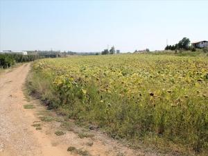 Земельный участок 6800 m² на Кассандре (Халкидики)