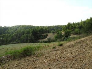 Земельный участок 30000 m² на Кассандре (Халкидики)
