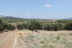 Земельный участок 6915 m² на Ситонии (Халкидики)