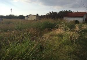 Земельный участок 6930 m² в Халкидиках