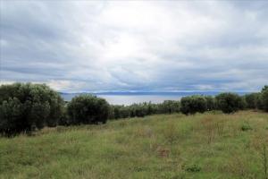 Земельный участок 16500 m² на Ситонии (Халкидики)