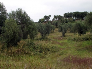 Земельный участок 18237 m² на Кассандре (Халкидики)