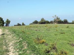Земельный участок 7000 m² на Кассандре (Халкидики)