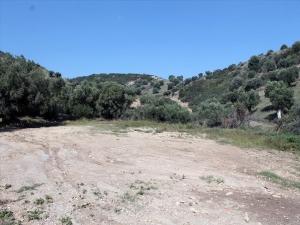 Земельный участок 3000 m² на Кассандре (Халкидики)
