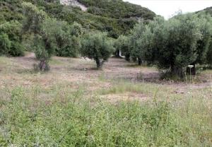 Земельный участок 9000 m² на Афоне (Халкидики)