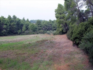 Земельный участок 6000 m² на Кассандре (Халкидики)