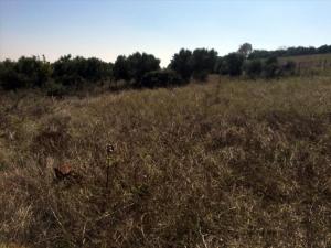 Земельный участок 200 m² в Халкидиках