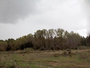 Земельный участок 65000 m² на Кассандре (Халкидики)